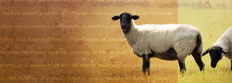 blog-flock